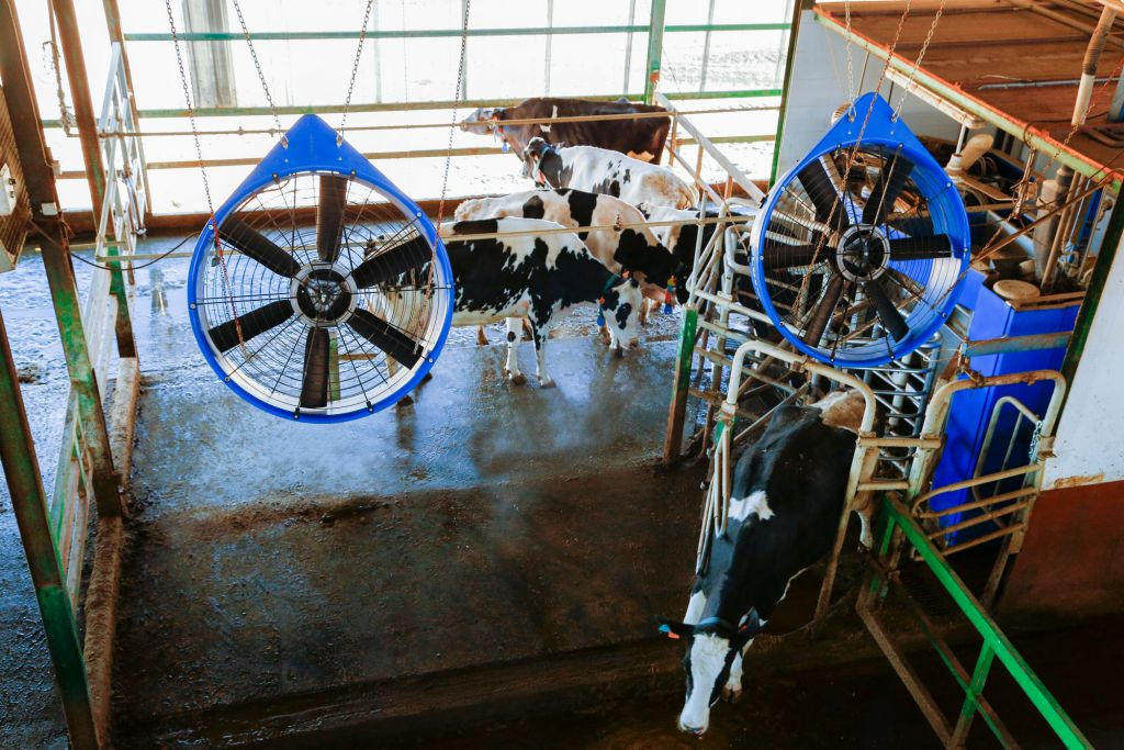 delaval-cow-cooling_2.jpg